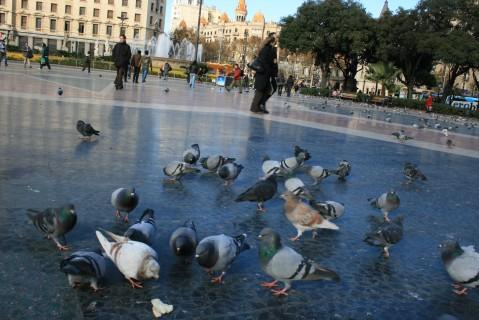 Palomas en la plaza Catalunya de Barcelona